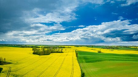 Yellow rape fields in spring, aerial view, Poland
