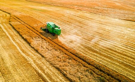 Flying above green combine working on field in summer Stock Photo