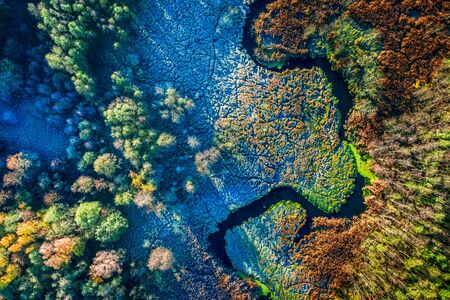 Multicolored swamps in autumn, view from above Stockfoto