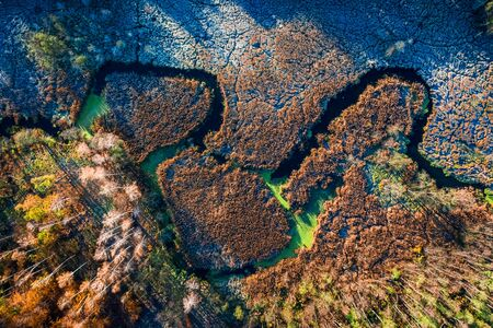Multi colored swamp in autumn, aerial view