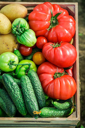 Closeup of fresh tomatoes and cucumbers in wooden box