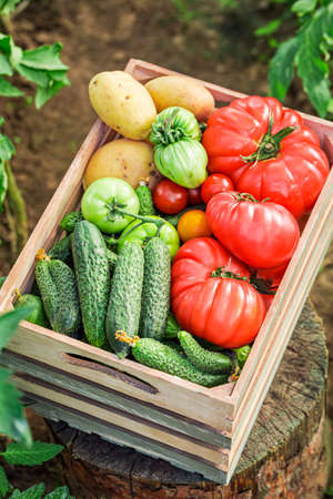 Fresh and healthy vegetables in wooden box