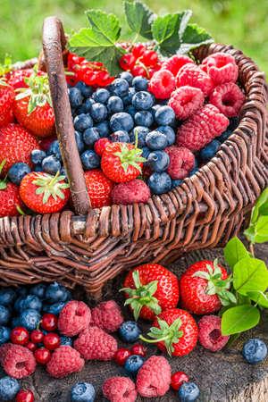 Closeup of healthy berries in summer garden