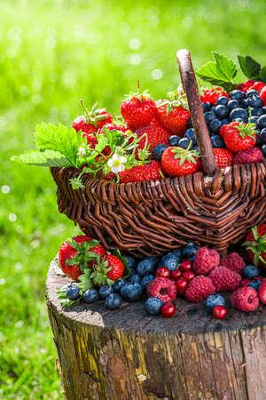Fresh berry fruits in wicker basket in sunny garden 版權商用圖片