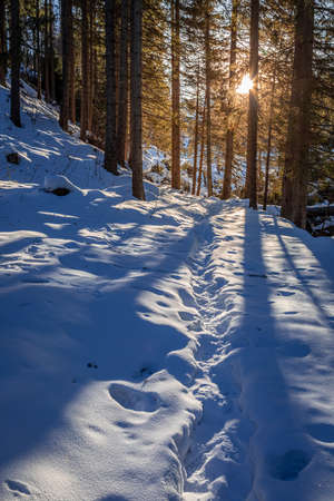 Sunset and sunbeam in snowy forest at winter, Poland