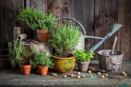 Aromatic and healthy herbs on the old porch. Rustic garden in summer afternoon