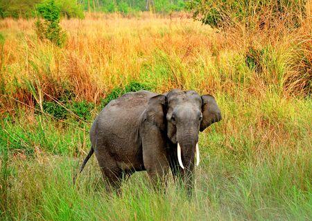 象: 若いタスカー 写真素材