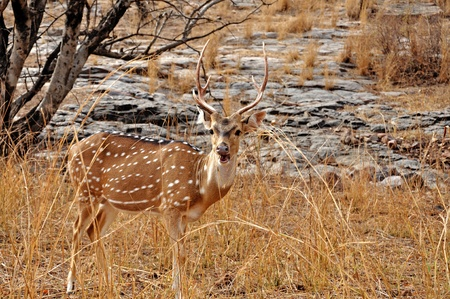 Image of spotted deer in the forest Фото со стока