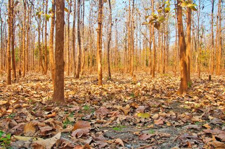 沙羅の森夏