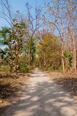 ジャングル トレイル 写真素材