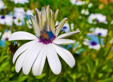 花にミツバチ