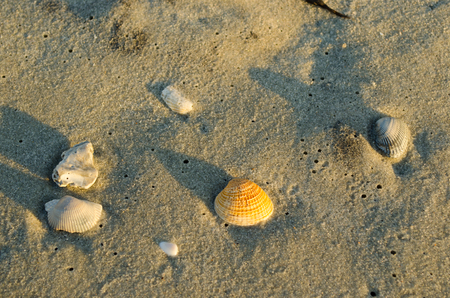 Sea shell at sandy beach. Morning, sand