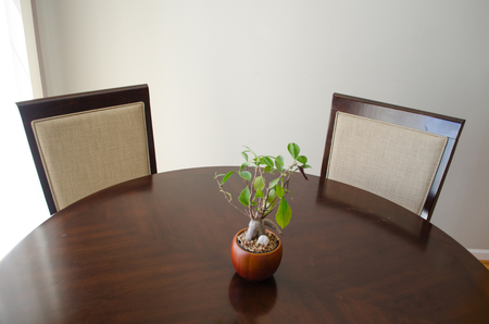 bonsai plant in a pot Foto de archivo - 101897363