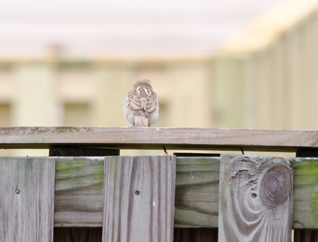 sparrow sitting on fence