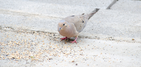 bird eating grains Stockfoto