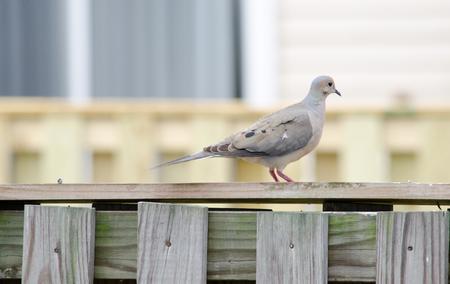 birds sitting on fence Stockfoto - 101972795