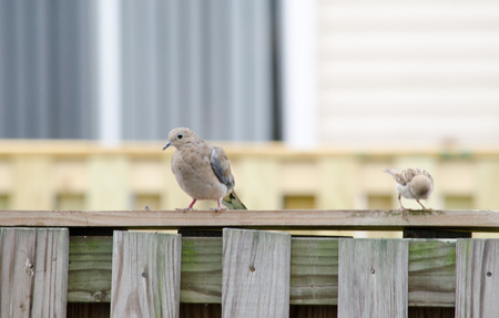 birds sitting on fence