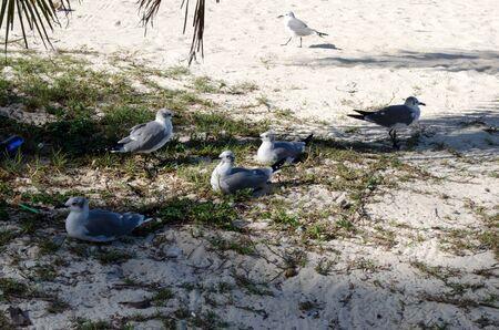 pigeons on the beach