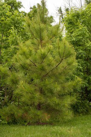 trees in the park Archivio Fotografico - 148807773