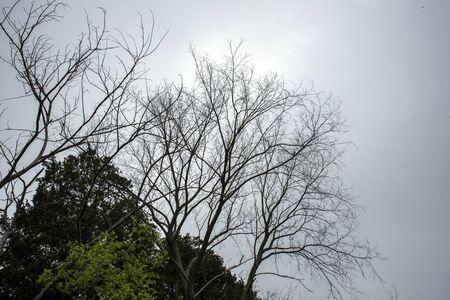 silhouette of a tree Archivio Fotografico - 147821995