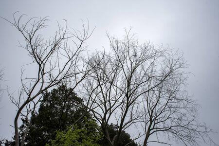 silhouette of a tree Archivio Fotografico - 147822711