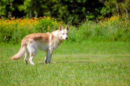 dog on the grassgarden Archivio Fotografico