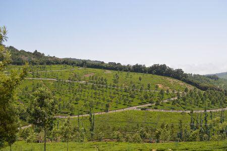 Tea estates, Kotagiri, India