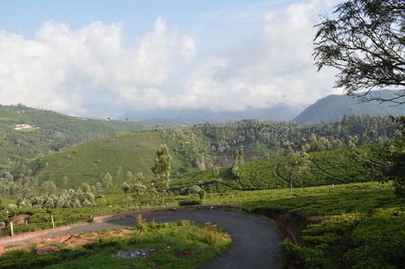 Kotagiri tea estate landscape, India