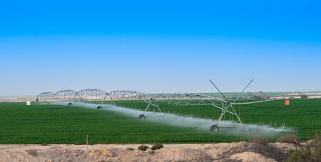 Tomato field irrigated by a pivot sprinkler system in Qatar farms. Stockfoto