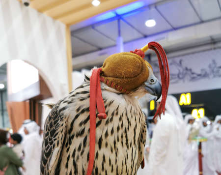 Background image of A falcon wearing its hood. falconry Stock fotó - 150597688
