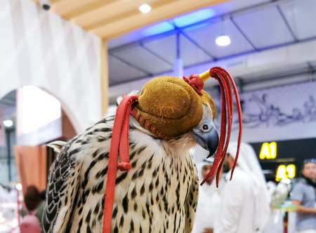 Background image of A falcon wearing its hood. falconry Stock fotó - 150597689