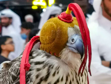 Background image of A falcon wearing its hood. falconry Stock fotó - 150597691