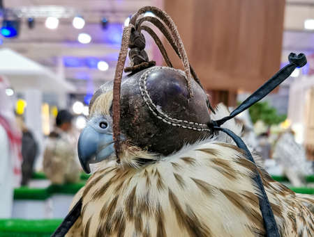 Background image of A falcon wearing its hood. falconry Stock fotó - 150597693