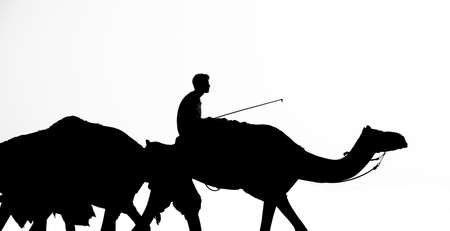 Black silhouette graphic of jockeys riding camels. Camel riding Stock Photo