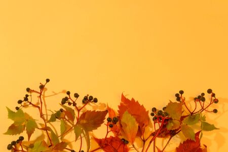 Autumn background of leaves and berries of bright beautiful flowers at the top. Space for text. Stok Fotoğraf
