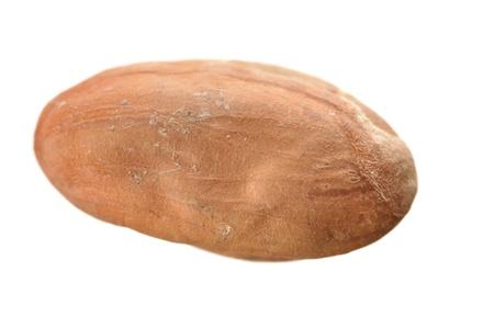 Single raw cacao bean isolated on white background photo