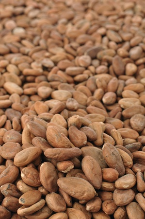 Vertical shot of pile of raw unpeeled cacao beans photo