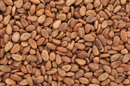 Superior horizontal shot of pile of raw cacao beans