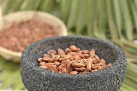 indian bean: Raw cocoa beans in mortar bowl with indigenous background