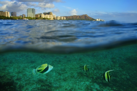 oahu: Waikiki, Oahu, Hawaii Stock Photo