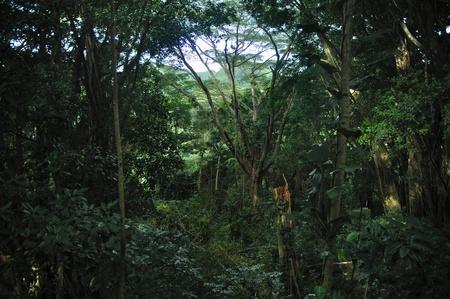 La for�t tropicale