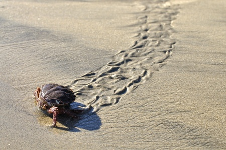 Crab walking on sand leaves distinct trail