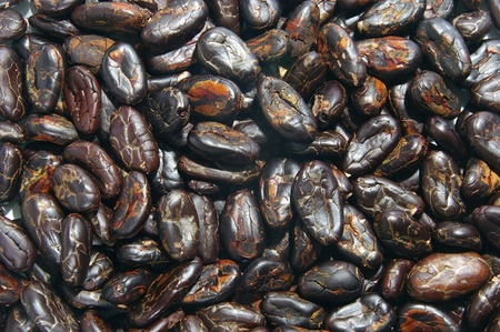 Closeup of raw cocoa beans photo