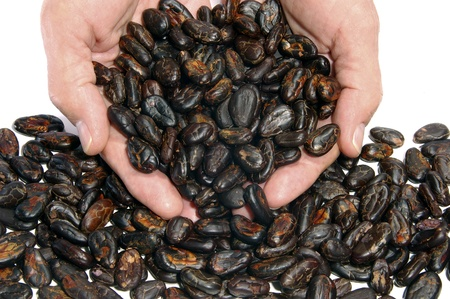 Double handful of raw cocoa beans photo