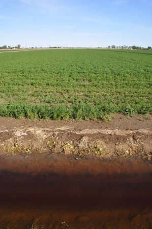 Irrigation ditch along edge of farming plot