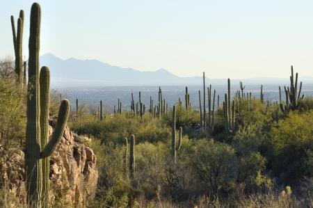 Vallei van Tucson, Arizona gezien vanaf saguaro cactus bedekte heuvels