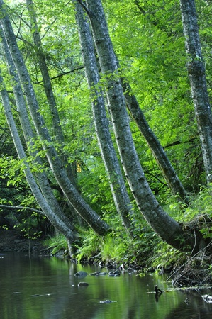 shady: Beautiful nature scenic of stream in shady forest