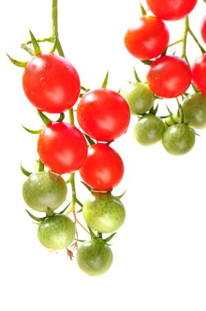Fresh ripe and green cherry tomatoes on vine on white background