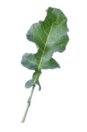 1 つの新鮮な緑のブロッコリーの葉が白で隔離 写真素材