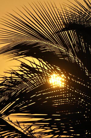 brightness: Telephoto of beautiful silhouette of coconut palm filtering bright orange sunset